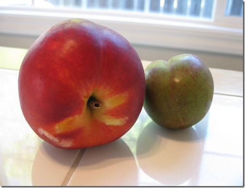 Nectarine and a Pluot