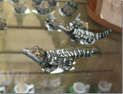Baby Alligators