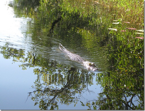 Evrerglade Gators