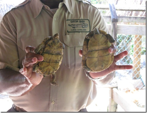 Male & Female Tortoise