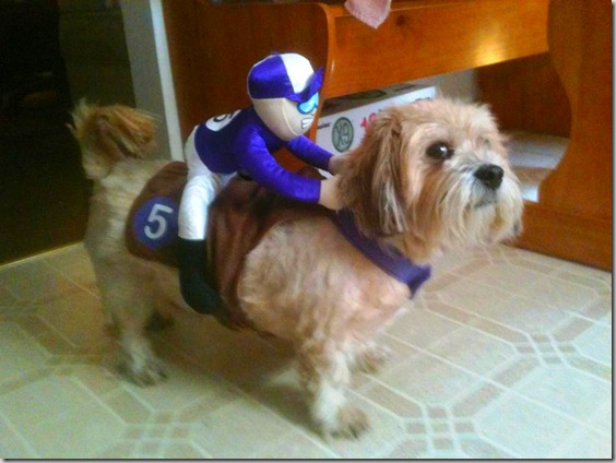 The Dog Rider